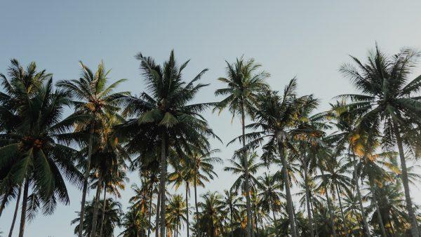 palmier sur beau ciel bleu vente